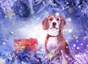 Год дружелюбной собаки