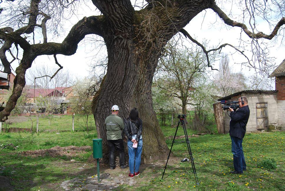 Ардонскому дубу присвоен всероссийский статус «Памятник живой природы»