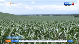 Аграрии Дигорского района ждут богатый урожай