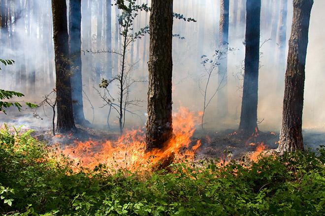В степных и горных районах Северной Осетии ожидается высокая пожароопасность лесов