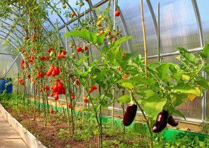 Аграрии Северной Осетии получат осенью 22 теплицы для выращивания овощей