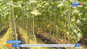 В Северной Осетии вплотную занялись выращиванием культур в тепличных комплексах