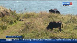 Жители селения Цми пытаются отстоять земли, которые использовали как пастбища