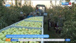 В Северной Осетии приступили к сбору урожая яблок