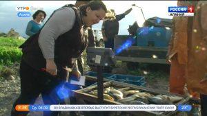Северная Осетия увеличила объемы выращенной форели