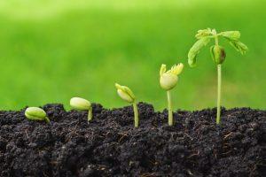 В Северной Осетии появится научный центр по сельскому хозяйству