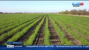 Единственное в России фермерское хозяйство, выращивающее спаржу, планирует увеличить сбор до 50 тонн