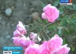 К 100-летию школы в станице Черноярской появился розарий