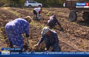 В Дигорском районе выдался урожайный год