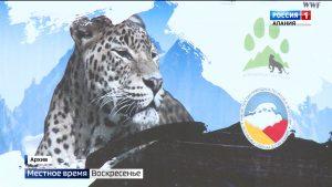 Пропавший леопард Эльбрус, возможно, перешел на южный склон Кавказского хребта