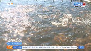 Осетинская форель признана лучшей в России