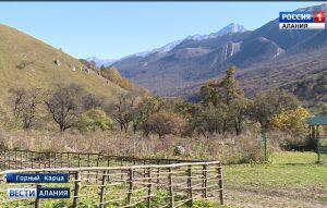 Семья Дзебисовых благодаря грантовой поддержке приобрела почти 250 голов крупнорогатого скота