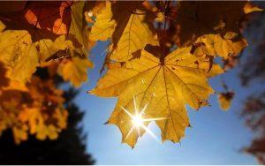 Теплая погода в Северной Осетии сохранится еще на несколько дней