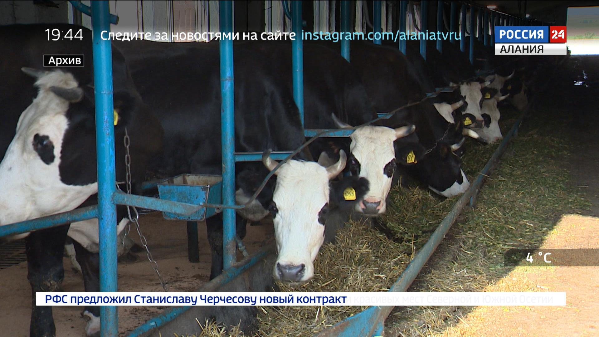 Специальный репортаж. Развитие АПК в Северной Осетии