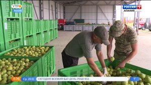 В Северной Осетии построят хранилище для фруктов