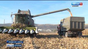 Ирафский район бьет рекорды по урожаю кукурузы