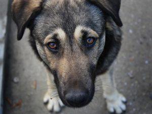 В Моздоке возбудили уголовное дело по фактам жестокого обращения с животными