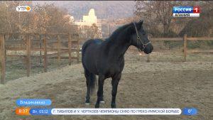 Дети с ОВЗ смогут бесплатно кататься на лошадях во владикавказском зоопарке