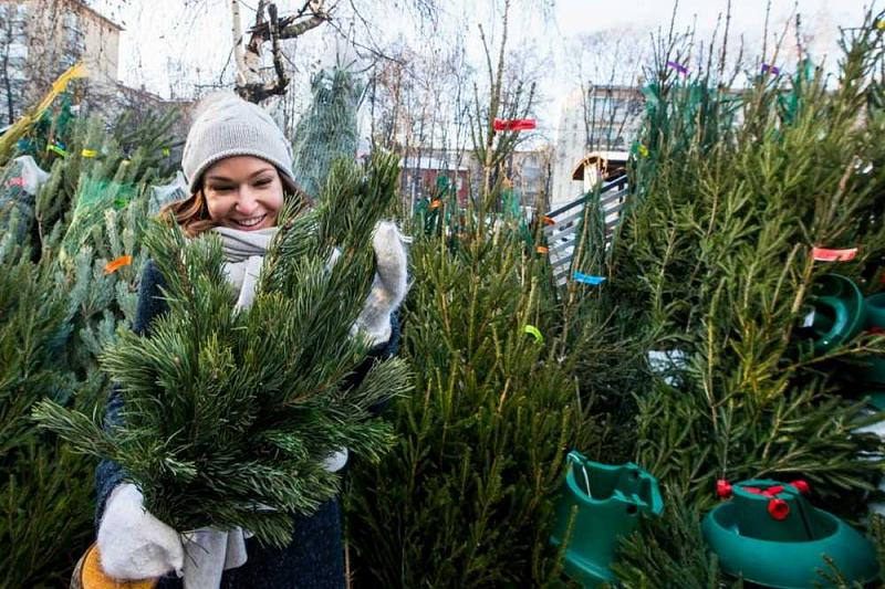 Ёлочные базары во Владикавказе откроются 15 декабря