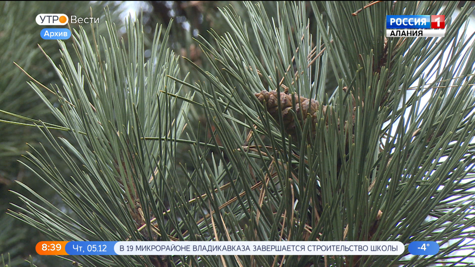 Сотрудники североосетинских лесничеств проводят рейды в преддверии новогодних праздников