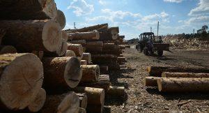 В Южной Осетии откроется деревообрабатывающее предприятие
