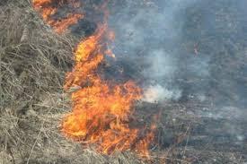 Между селениями Дунта и Камунта горит сухостой