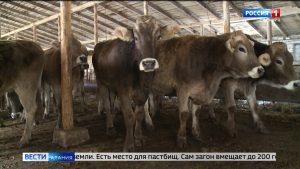 Благодаря грантовой поддержке в республике развивается животноводство