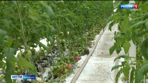 Североосетинские фермеры устанавливают теплицы, полученные по грантовой программе