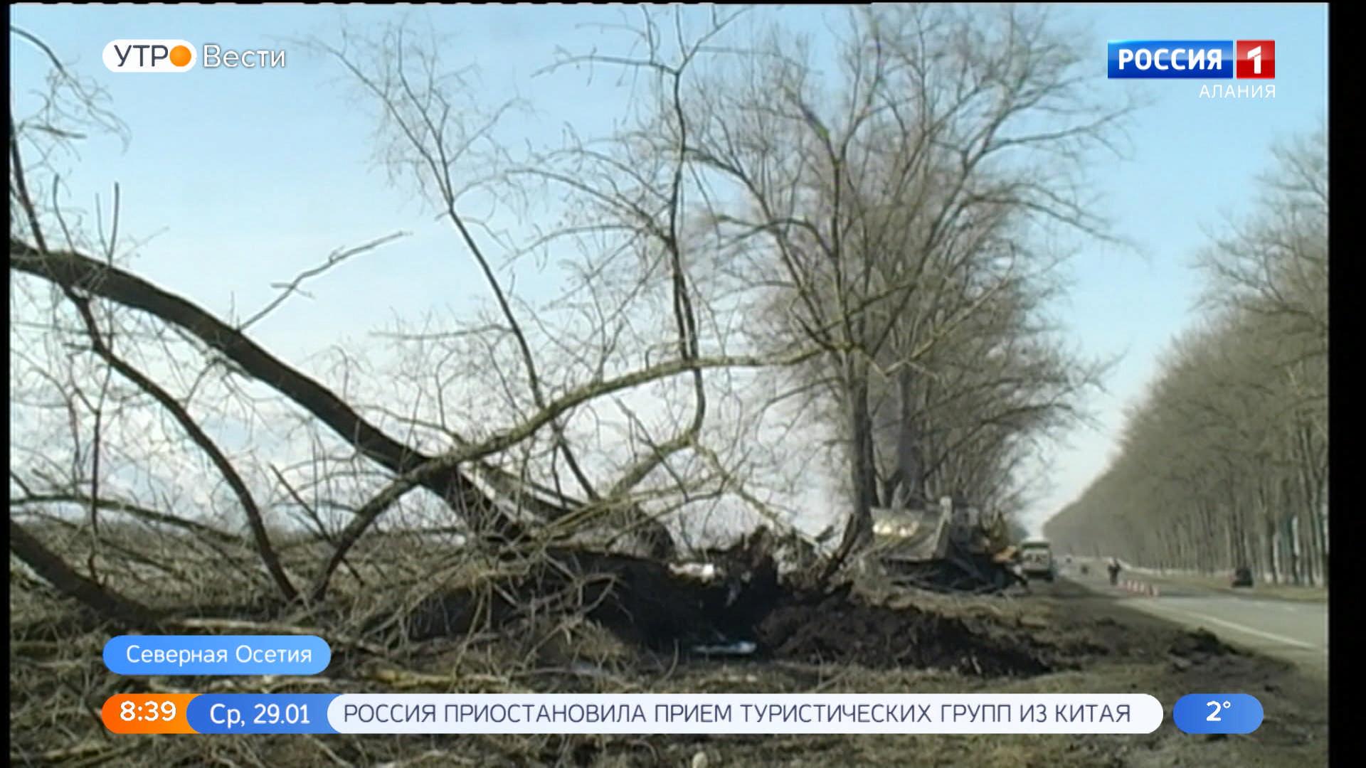 Специалисты вырубают старые деревья вдоль трассы Владикавказ – Ардон – Чикола – Лескен-2