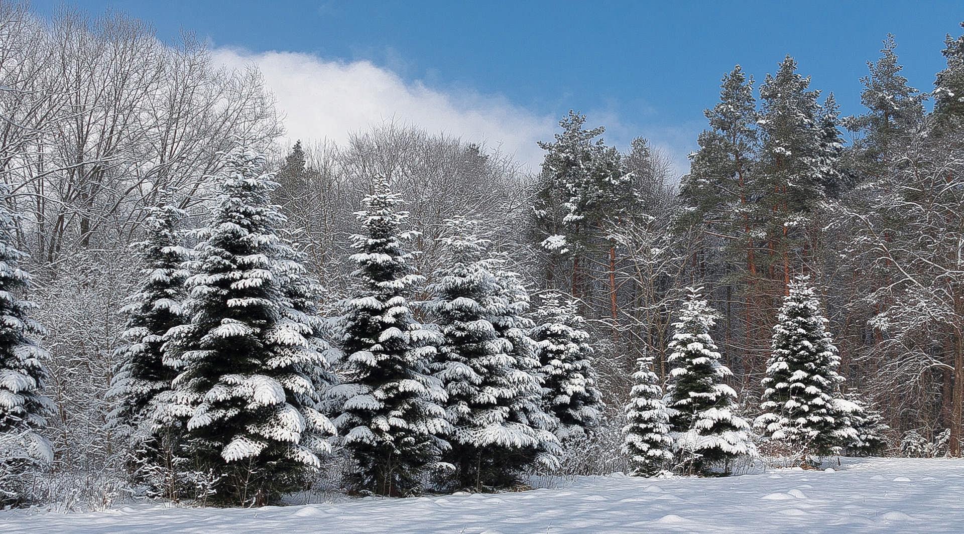 АМС: обнаруженные в Дендрарии снежные блохи абсолютно безвредны