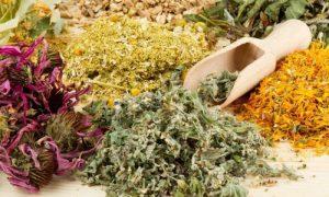 В Северной Осетии реализуют проект производства сырья из лекарственных трав