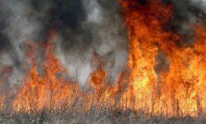 Между селами Балта и Чми снова горит сухостой