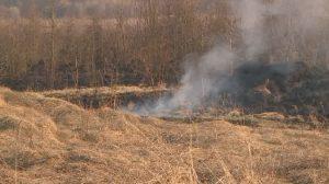 МЧС: все очаги возгорания сухостоя ликвидированы