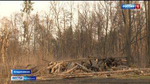 Жильцы домов, расположенных в районе Сапицкой будки, обеспокоены рубкой деревьев