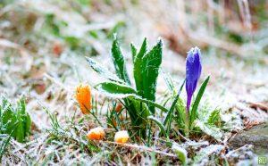 МЧС предупредило о заморозках в Северной Осетии