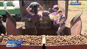 Студенты агрофакультета ГГАУ проходят практику в учебном хозяйстве