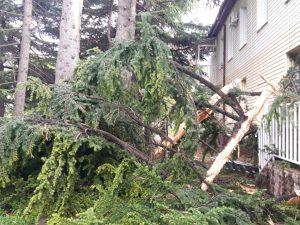 В Цхинвале молния ударила в дерево около детского сада