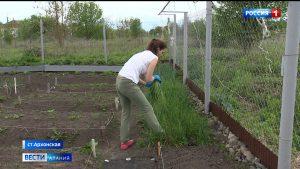 Садоводство: как с пользой провести самоизоляцию