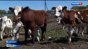 Животноводческие хозяйства республики усилили санитарный контроль