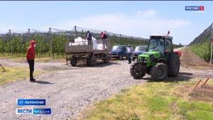 Сельхозпредприятия Северной Осетии приступили к сезонным работам
