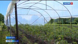 Управление сельского хозяйства поддерживает начинающих овощеводов, получивших гранты