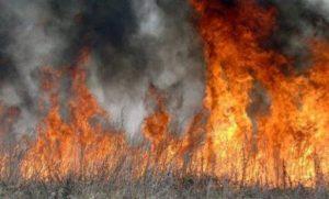 В Моздокском районе выжигание сухостоя привело к пожару в селении Новогеоргиевское