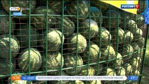 58 точек продажи арбузов во Владикавказе получили официальные разрешения на работу