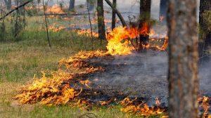 В Моздокском районе ограничат пребывание граждан в лесах из-за высокого класса пожароопасности