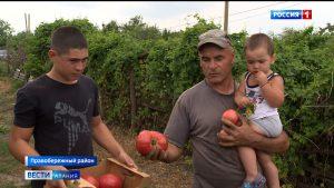 Грантополучатели в Северной Осетии собирают первый урожай в теплицах
