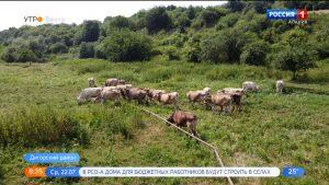 В Северной Осетии продолжается прием заявок на предоставление грантов крестьянским хозяйствам