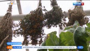 В Северной Осетии планируется создать производство сырья из лекарственных трав