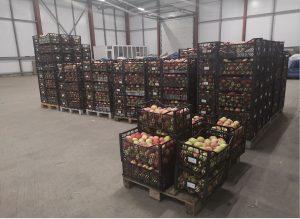 В Северной Осетии уничтожили санкционные яблоки из Польши