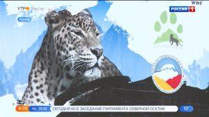 Сотрудники группы мониторинга переднеазиатских леопардов получили данные о леопарде Кодор