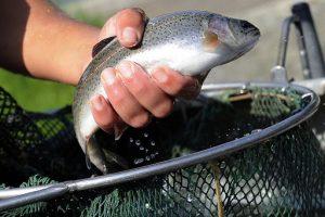 В Северной Осетии производство рыбы увеличится в 10 раз по сравнению с 2017 годом